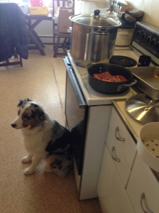 "I cooked for us, trundling around on my orange studio stool. Piper was my assistant and always ready to ""help""."