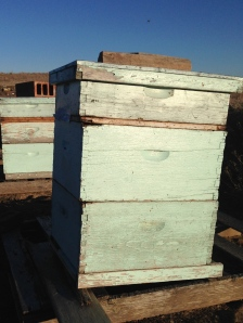 Once upon a time the local beekeeper had hives on the land but there wasn't enough flowering plants to provide pollen for honey. I was so sad a few months later when he carried off the hives. I so wanted to learn beekeeping from him. Someday I will have bees.